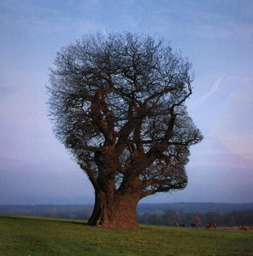 mindfulness zelf compassie